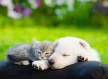 Chiot suisse blanc du ` s de berger et petit chaton dormant ensemble Photos stock