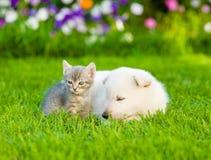 Chiot suisse blanc du ` s de berger et petit chaton dormant ensemble sur l'herbe verte Photographie stock libre de droits