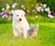 Chiot suisse blanc du ` s de berger se reposant avec le chaton minuscule sur l'herbe verte Images libres de droits
