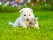 Chiot suisse blanc du ` s de berger se trouvant avec le chaton sur l'herbe verte Photo stock