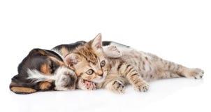 Chiot tigré de chien de chaton et de basset de sommeil se trouvant ensemble D'isolement sur le blanc Image libre de droits
