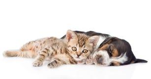 Chiot tigré de chien de chaton et de basset de sommeil se trouvant ensemble D'isolement Photo stock