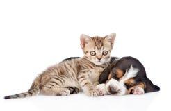 Chiot tigré de chien de chaton et de basset de sommeil se trouvant ensemble D'isolement Images libres de droits