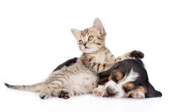 Chiot tigré de chien de chaton et de basset de sommeil se trouvant ensemble D'isolement sur le blanc Photo libre de droits