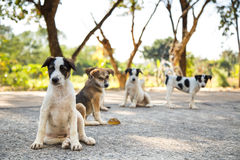 chiots Photo stock