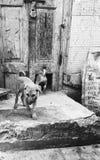 chiots Photo libre de droits
