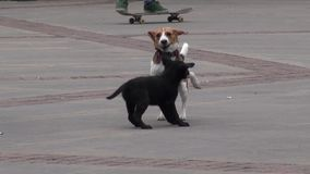 Chiots, chiens, canines, animaux familiers, animaux banque de vidéos