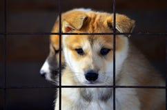 Chiots dans une cage Images stock