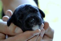 Chiots de chien Images stock