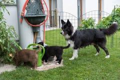 Chiots de chien avec la mère dans le jardin Images stock