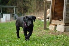 Chiots de chien sur le pré Photo stock