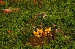 Chiots de Fox rouge dans les Wildflowers photos libres de droits