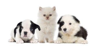 Chiots et chaton noirs et blancs Photos libres de droits