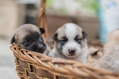 Chiots jouant dehors Images stock