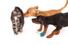 Chiots rencontrant le chaton Images libres de droits