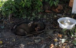Chiots sans abri sous l'arbre photo stock