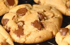 chip chocolate cookies Στοκ φωτογραφία με δικαίωμα ελεύθερης χρήσης