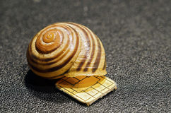 Chip and empty snail shell Stock Image