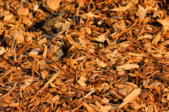 Chip off the block. The photo shows a close up of a pile of woodchips Royalty Free Stock Image
