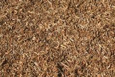 chip pochodzi z drewna Zdjęcia Royalty Free