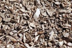chip pochodzi z drewna Zdjęcia Stock