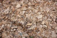chiper på jordningen i skogen arkivfoton