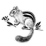Chipmuck and berries. Chipmunk and berries. Ink black and white illustration vector illustration