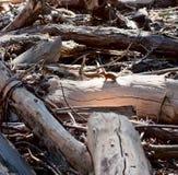 Chipmunk στη σύνδεση Yosemite Στοκ φωτογραφίες με δικαίωμα ελεύθερης χρήσης