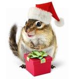 Chipmunk в красном шлеме Santa Claus с коробкой подарка Стоковые Фото