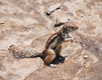 Chipmunk Stock Photo