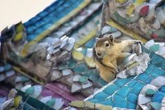 chipmunk Photos libres de droits