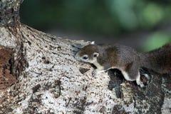 Chipmunk auf Baum Stockfoto
