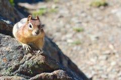 Chipmunk auf den Felsen Lizenzfreie Stockbilder