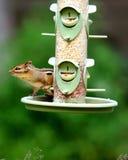 Chipmunk auf einer Vogel-Zufuhr Lizenzfreies Stockfoto