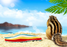 Chipmunk on beach, vacation concept royalty free stock photography