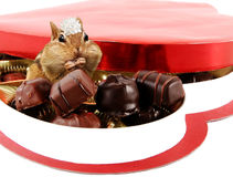 Chipmunk in candy box Stock Images