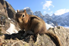 Chipmunk close-up on a rock cliff Royalty Free Stock Photo