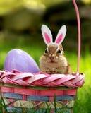 Chipmunk dans le panier de Pâques image libre de droits