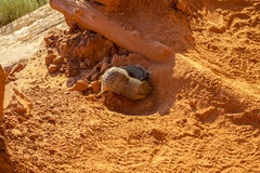 Chipmunk digging in the sand Royalty Free Stock Photos