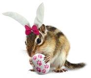 Chipmunk divertido con los oídos del conejito y el huevo de Pascua imagenes de archivo