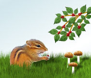 Chipmunk Eating Berry Stock Photo