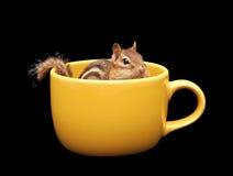 Chipmunk en una taza Imagen de archivo libre de regalías