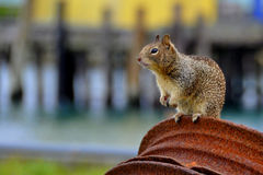 Chipmunk on Metal Stock Photo