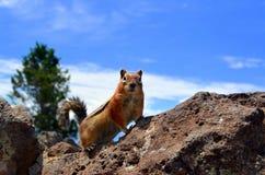 Chipmunk na skałach Fotografia Stock