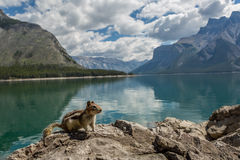 Chipmunk na skale halnym jeziorem Zdjęcie Royalty Free