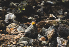 Chipmunk nas rochas Fotos de Stock Royalty Free