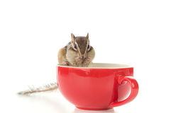 Chipmunk on red cup Royalty Free Stock Photo