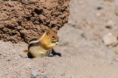 Chipmunk and Rocks Royalty Free Stock Photo