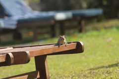Chipmunk is sitting on the sunbed. Stock Photos