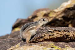 Chipmunk stands on a stone in the sunshine on a blurred backgrou Stock Photo